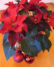 Kerstster met kerstdecoratie